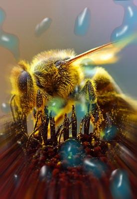 scarabée signification chez soi